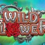 Wild Flower RTP And A Review Found On Our Site. The Game Was Developed By Big Time Gaming